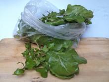 Rukkola saláta, bio (10 dkg/csomag)