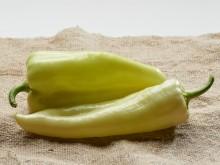 Paprika (csípős, Viharsarok)